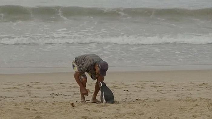 zachraneny tucniak (3)