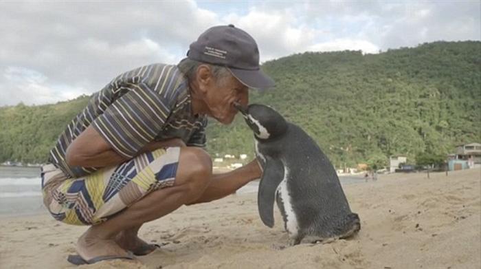 tučniak (4)