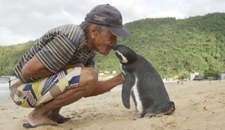 Zachránený tučniak prepláve každý rok 8000km aby sa stretol so svojím 71ročným zachráncom