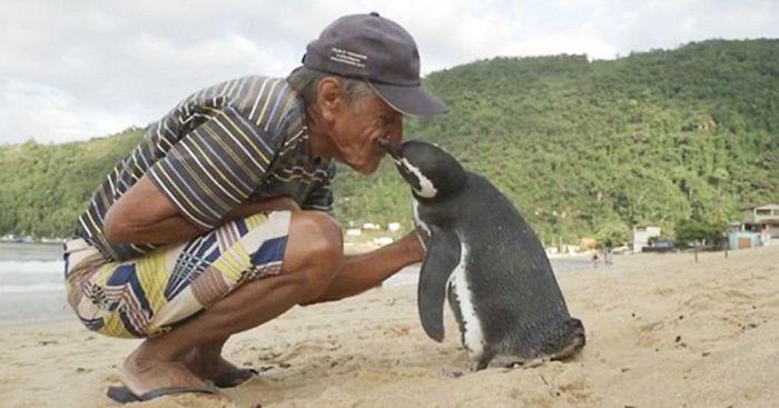 tučniak (6)