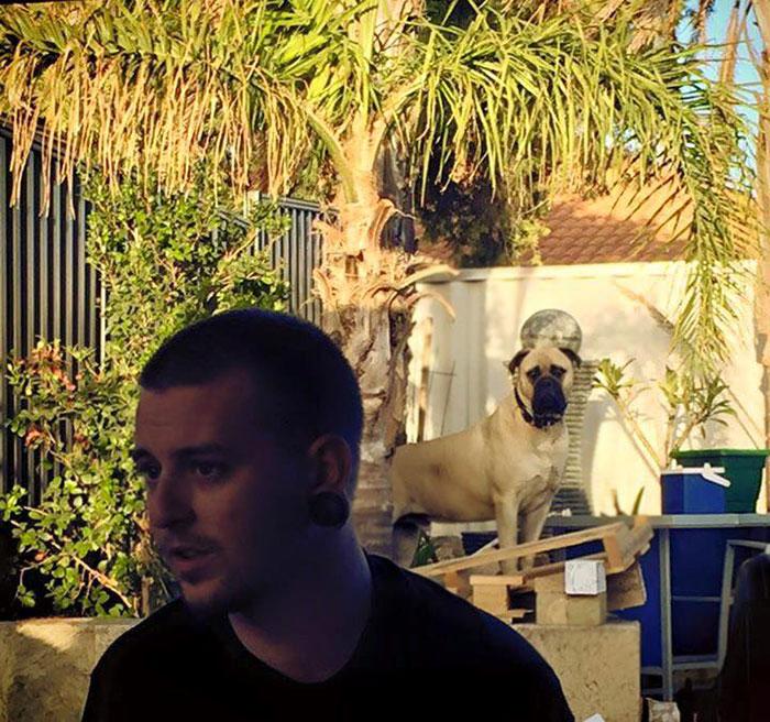 pes pozorovatel (10)