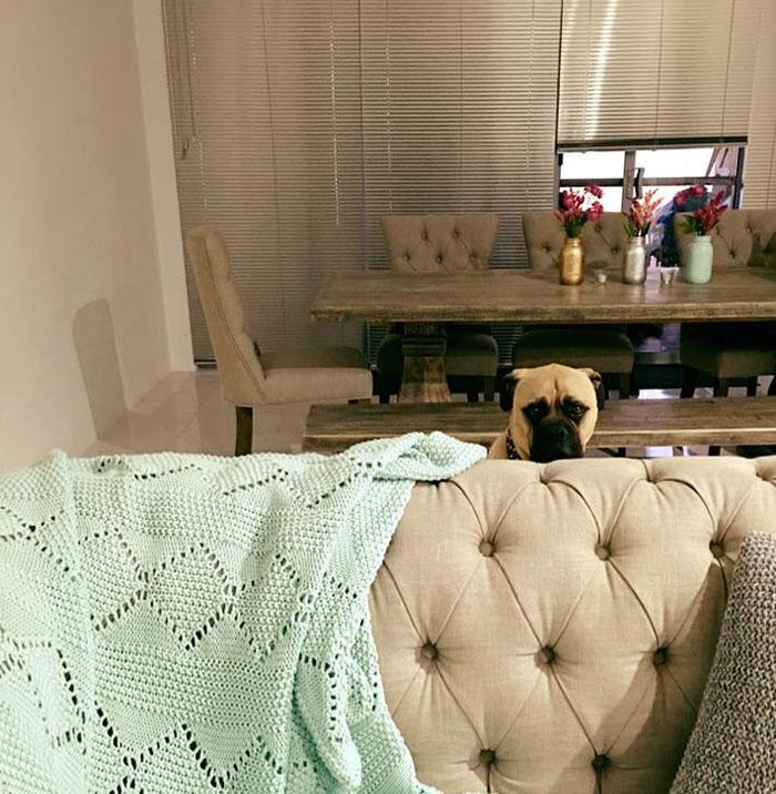 pes pozorovatel (12)