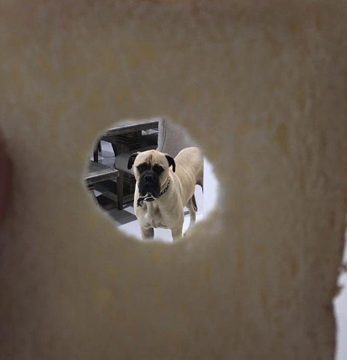 pes pozorovatel (13)