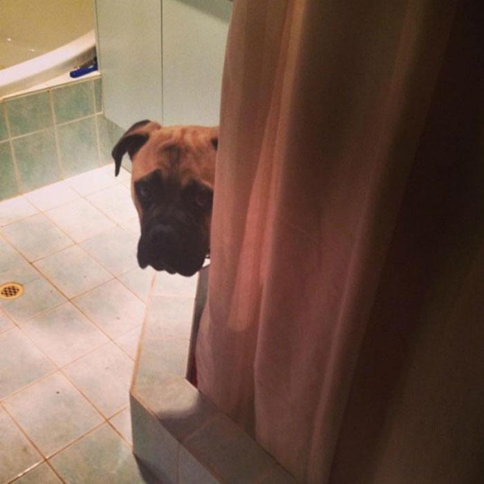 pes pozorovatel (7)