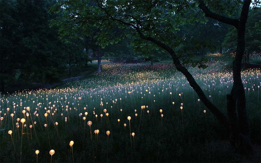 svetelne umenie (4)