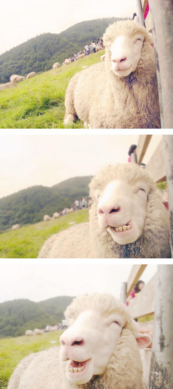 usmievajuce sa zvieratka (21)