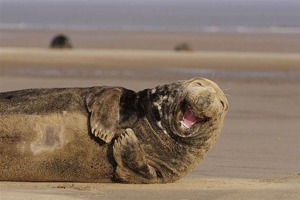 usmievajúce sa zvieratká (8)