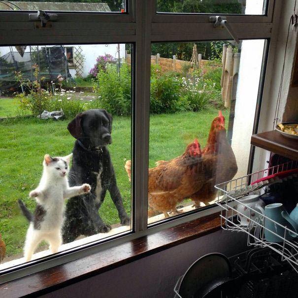 zvierata sa chcu dostat dnu (1)