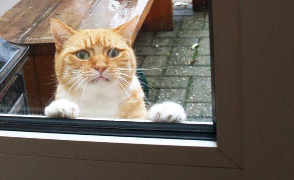 zvierata sa chcu dostat dnu (12)