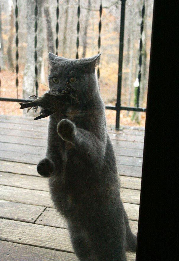 zvierata sa chcu dostat dnu (13)