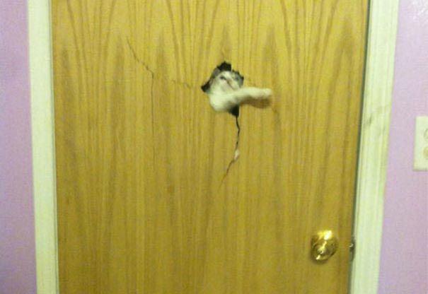 zvierata sa chcu dostat dnu (14)