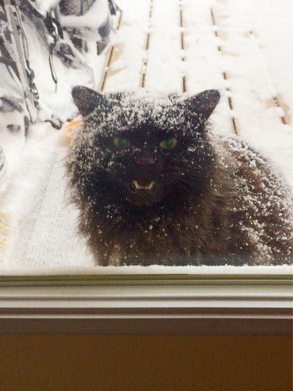 zvierata sa chcu dostat dnu (15)