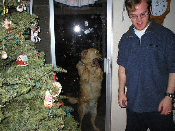 zvierata sa chcu dostat dnu (16)