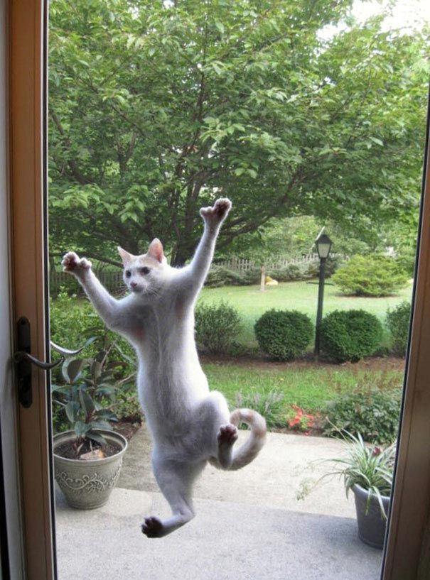 zvierata sa chcu dostat dnu (18)