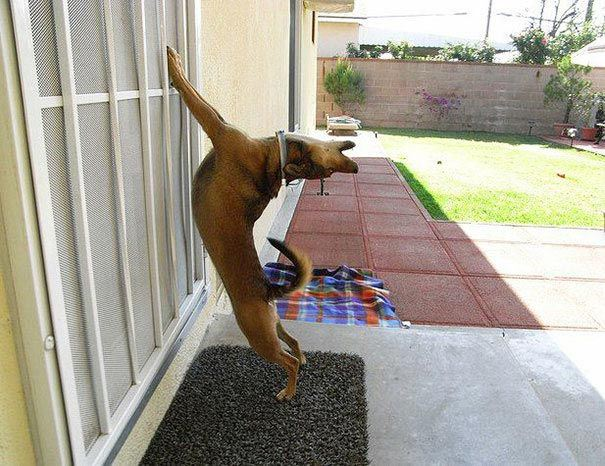 zvierata sa chcu dostat dnu (2)