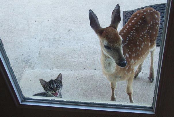 zvierata sa chcu dostat dnu (20)