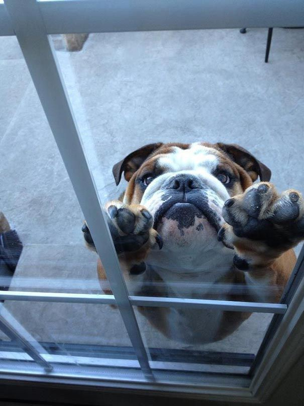 zvierata sa chcu dostat dnu (23)
