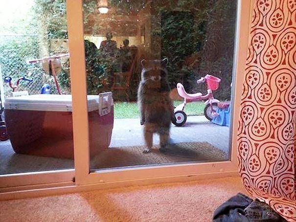 zvierata sa chcu dostat dnu (3)