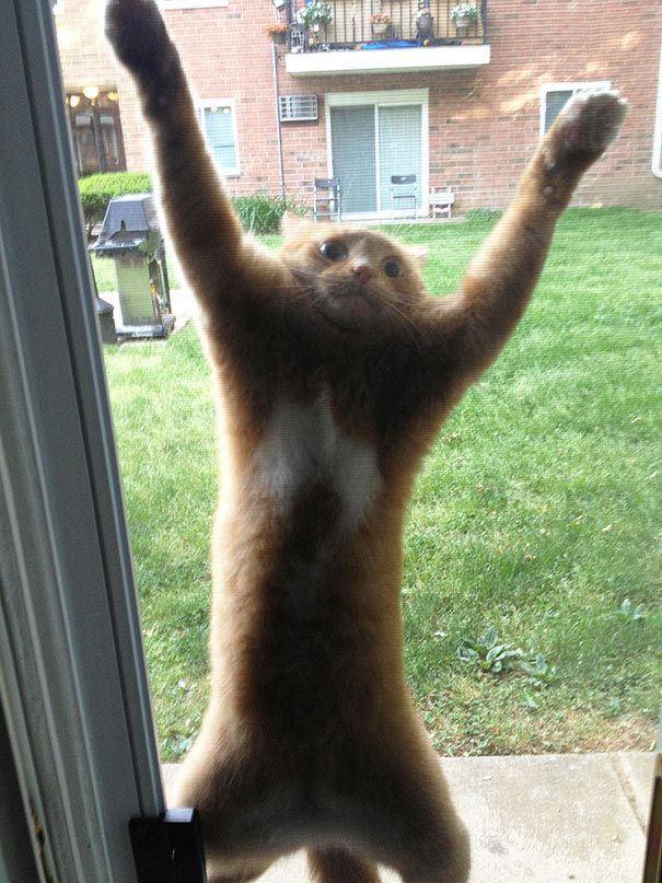 zvierata sa chcu dostat dnu (4)