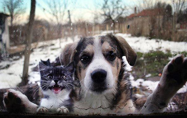 zvierata sa chcu dostat dnu (7)