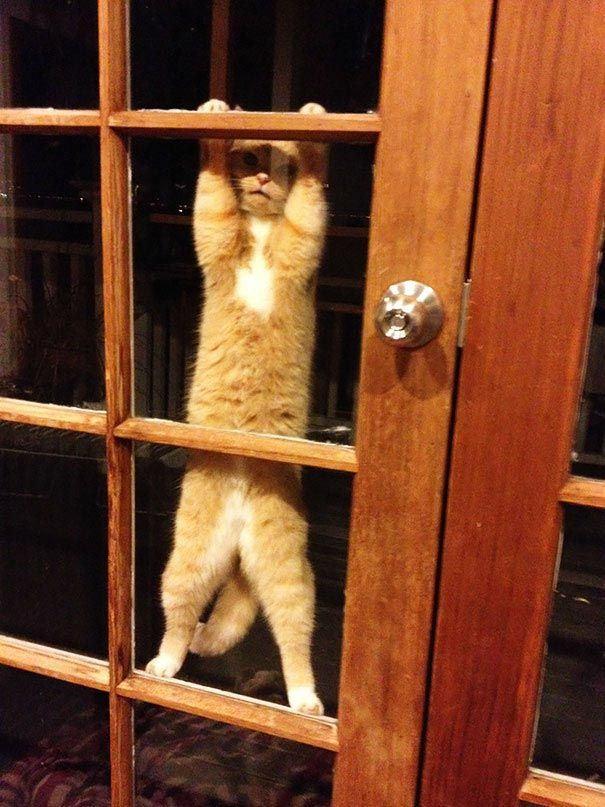 zvierata sa chcu dostat dnu (8)
