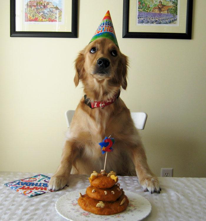 zvieratka maju narodeniny (10)