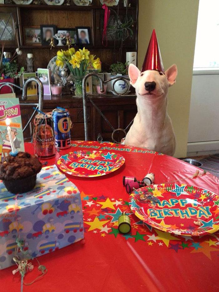 zvieratka maju narodeniny (11)