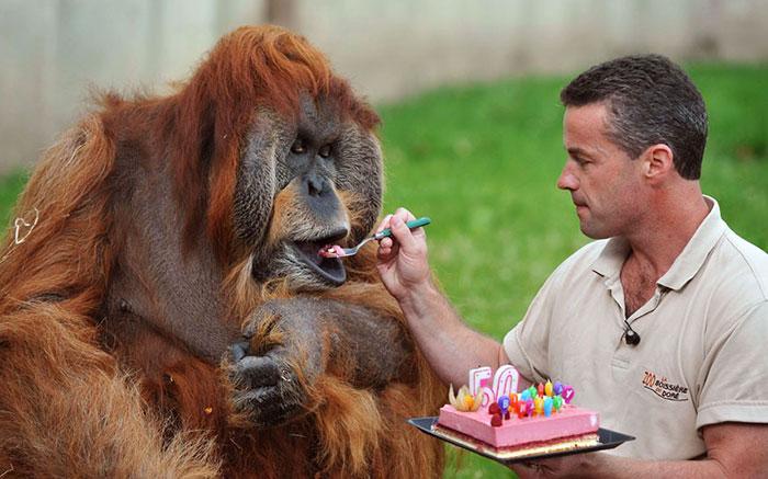 zvieratka maju narodeniny (15)