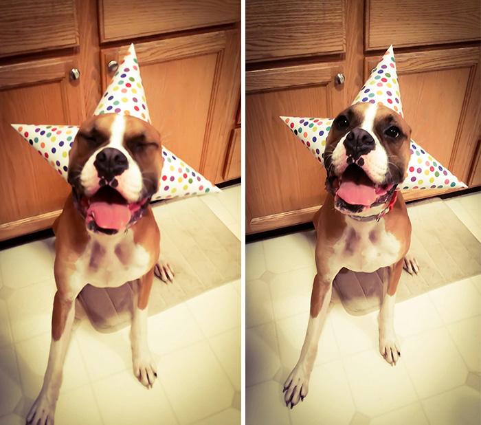zvieratka maju narodeniny (16)