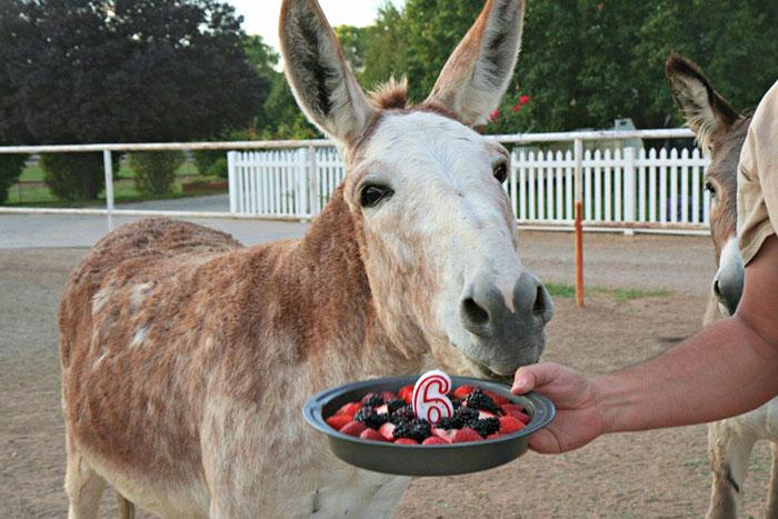 zvieratka maju narodeniny (17)