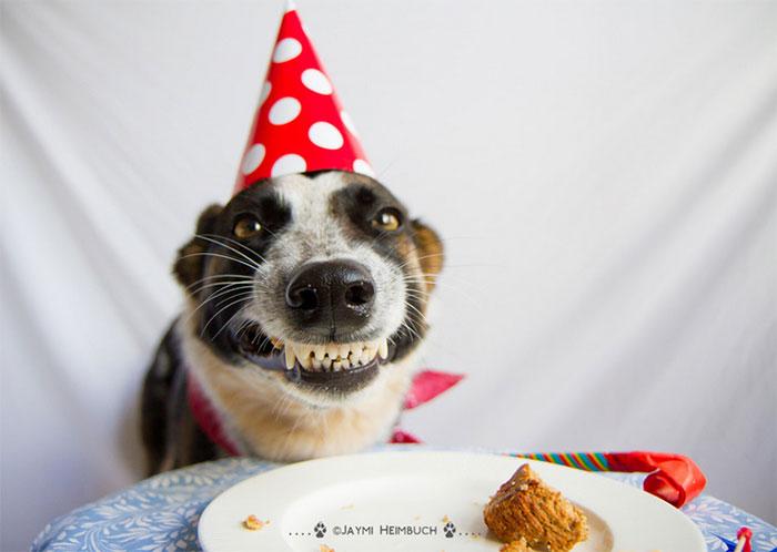 zvieratka maju narodeniny (18)