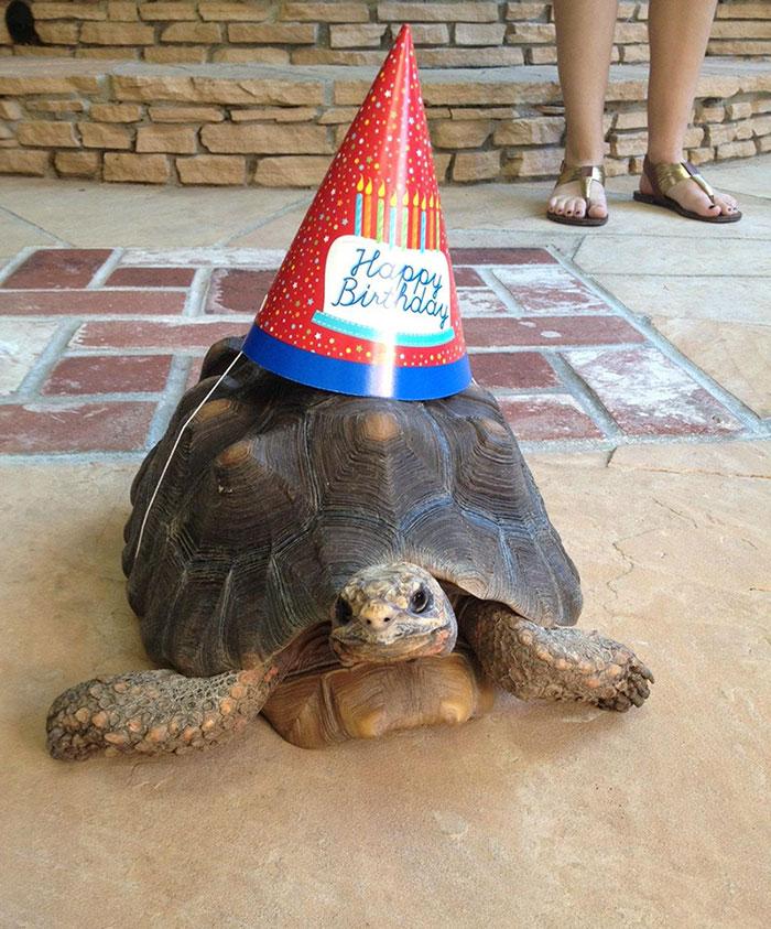 zvieratka maju narodeniny (19)