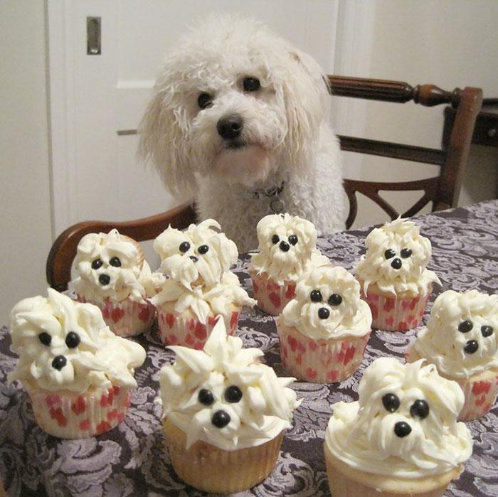 zvieratka maju narodeniny (2)