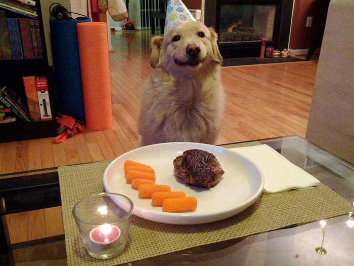 narodeniny domácich miláčikov (3)