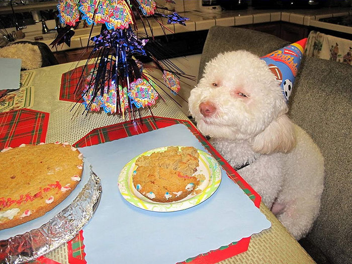 zvieratka maju narodeniny (4)
