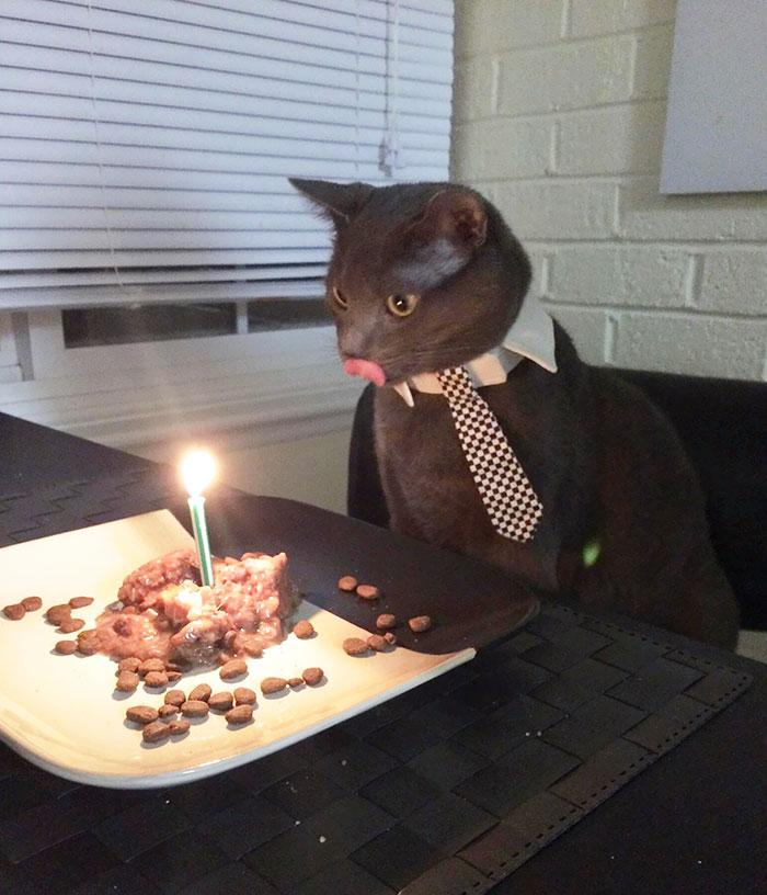 zvieratka maju narodeniny (7)