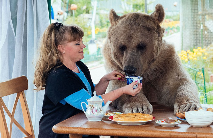 adoptovany medved (1)