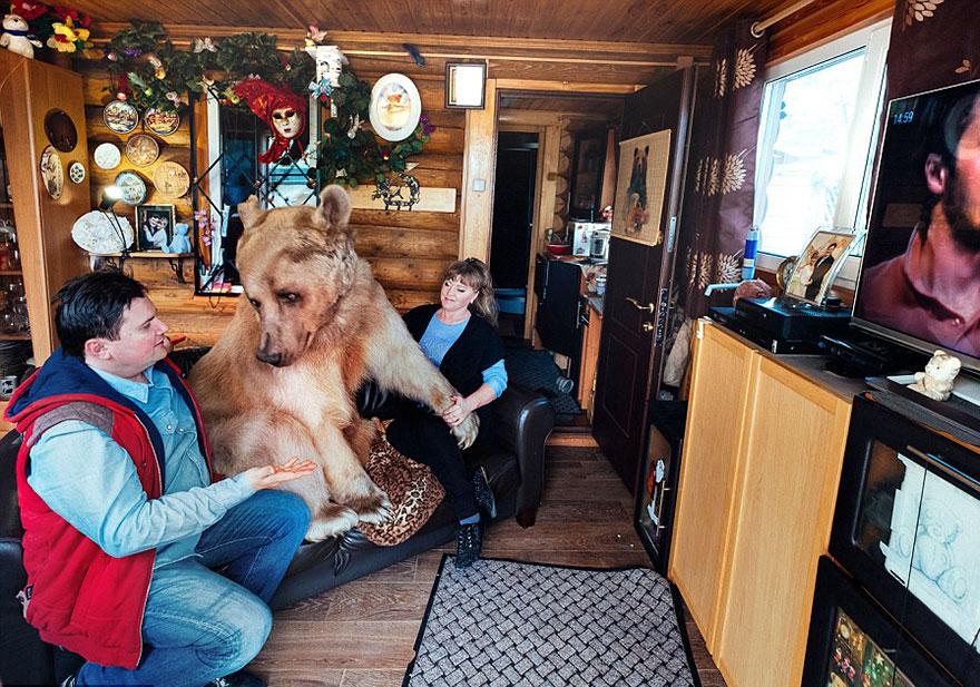 ruský pár adoptoval medveďa (10)