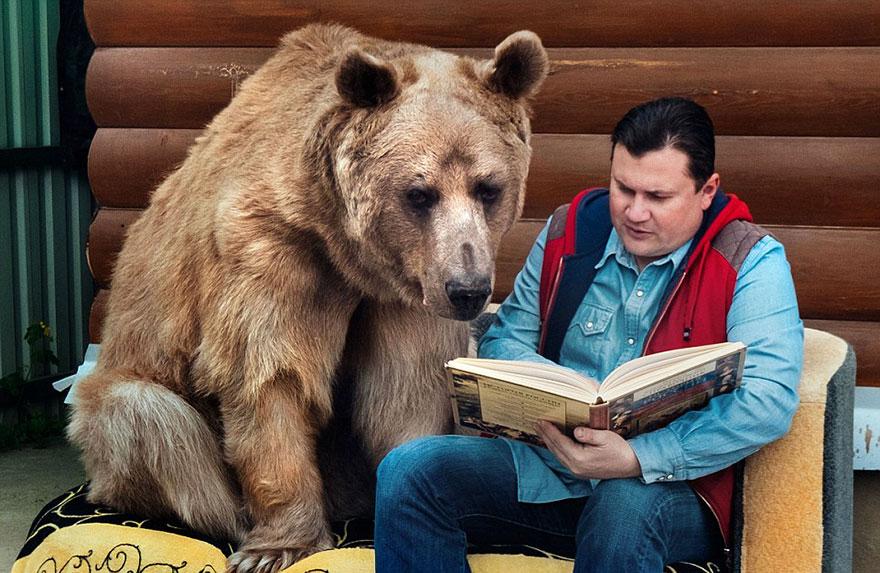 adoptovany medved (11)