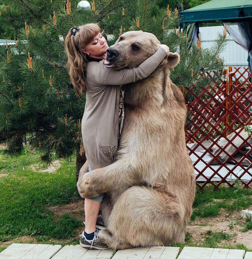 adoptovany medved (3)