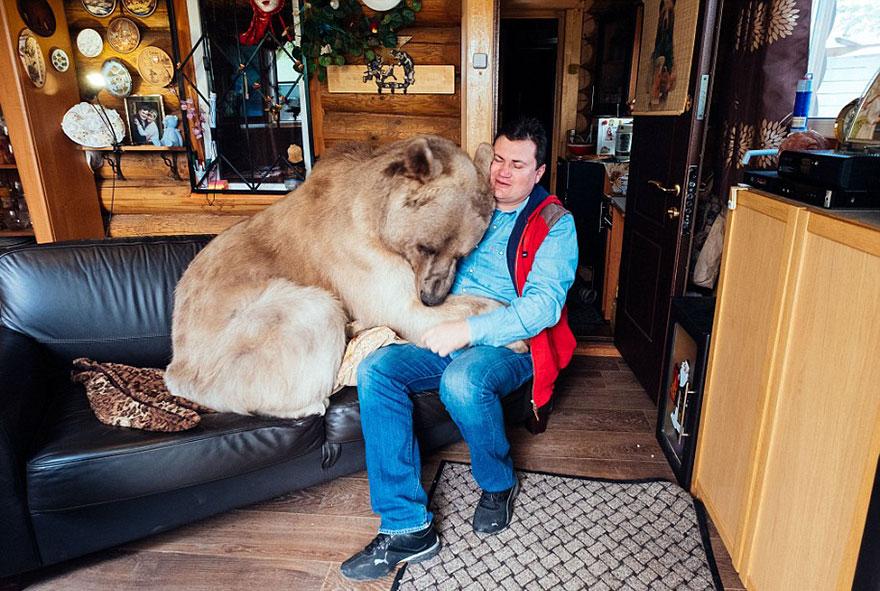adoptovany medved (4)