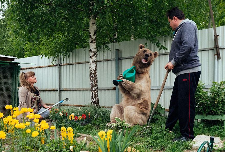 ruský pár adoptoval medveďa (5)