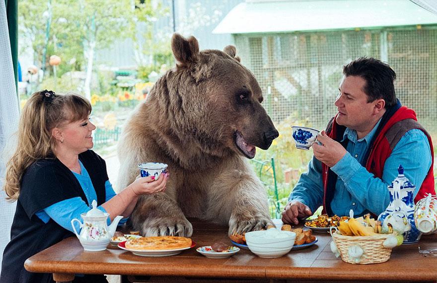 adoptovany medved (8)
