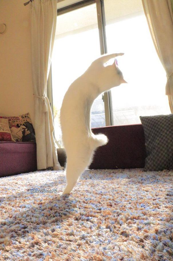 mačka tancuje (2)