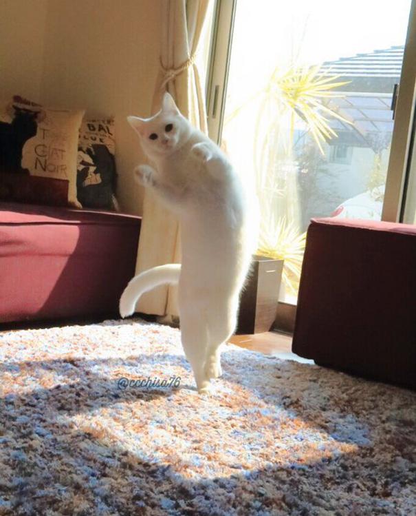 mačka tancuje (5)