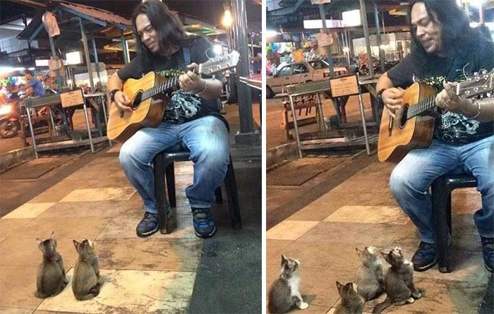 štyri mačiatka