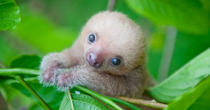 milé malé lenochody (14)