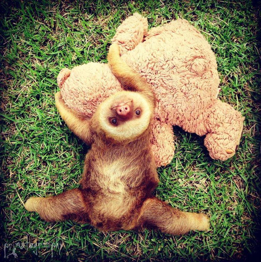 milé malé lenochody (17)