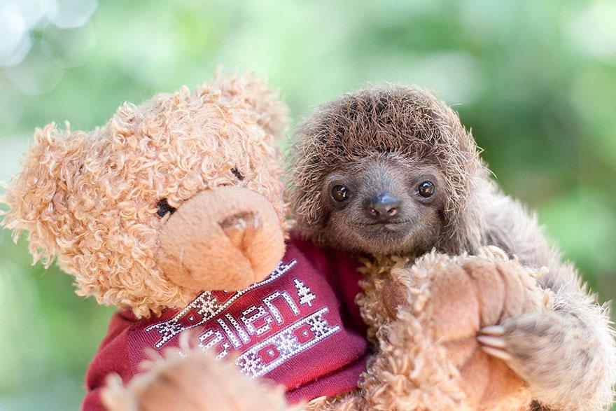 milé malé lenochody (3)