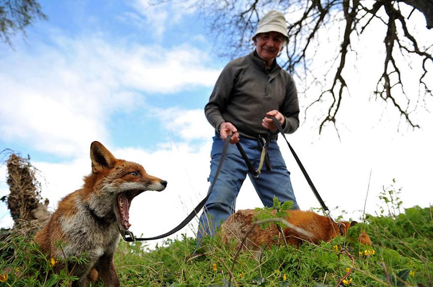 muž a líšky (1)